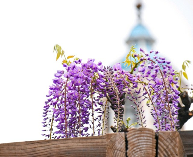 f:id:flowerTDR:20190422085338j:image