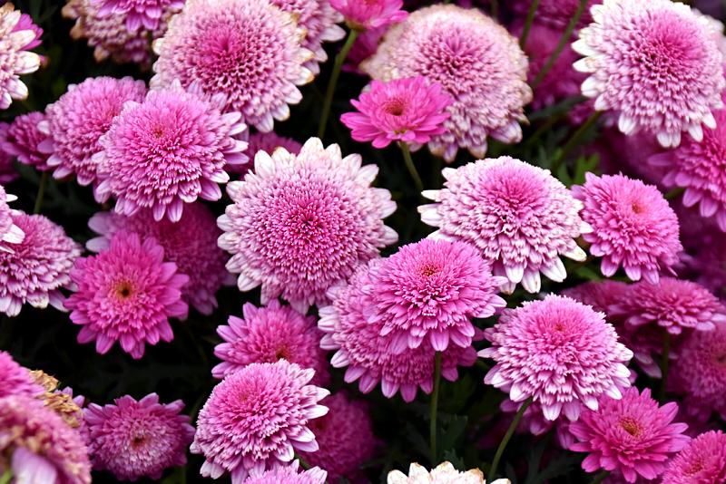 f:id:flowerTDR:20190424092939j:plain