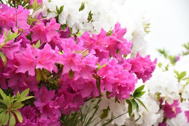 f:id:flowerTDR:20190427074230j:image