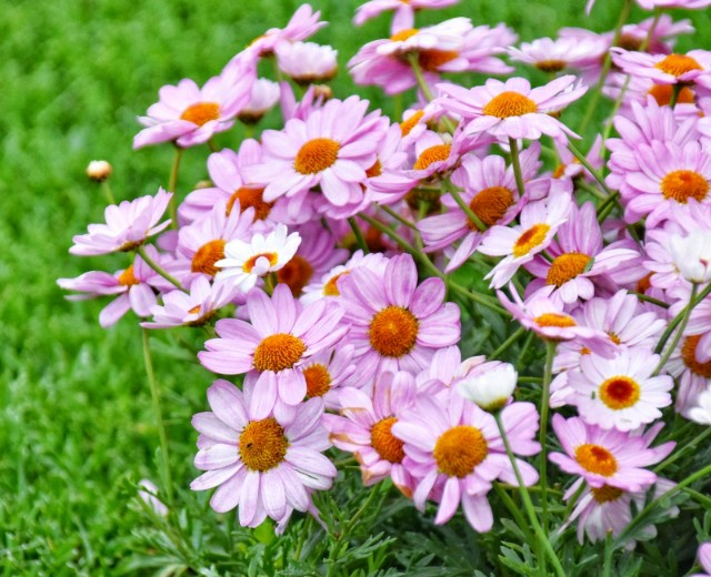 f:id:flowerTDR:20190503085446j:image