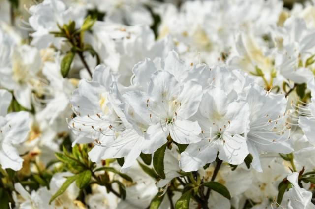 f:id:flowerTDR:20190505092304j:image