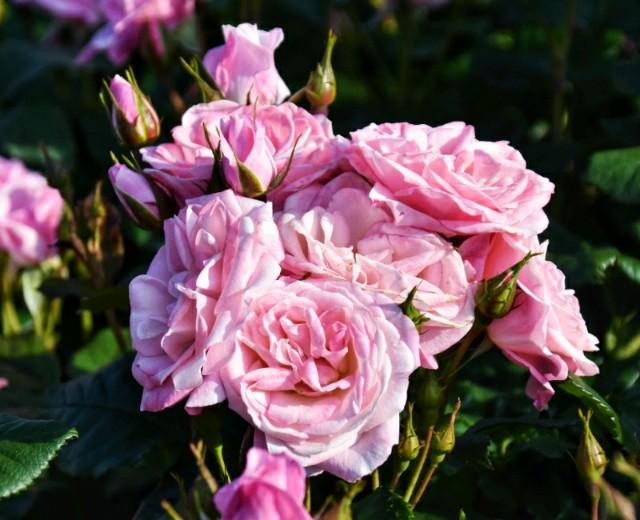 f:id:flowerTDR:20190510091247j:image