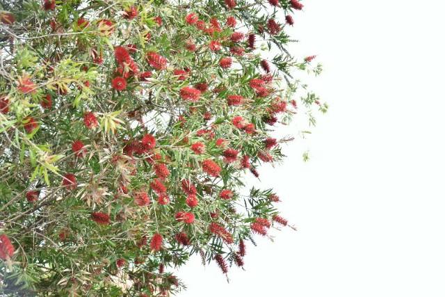 f:id:flowerTDR:20190513090712j:image