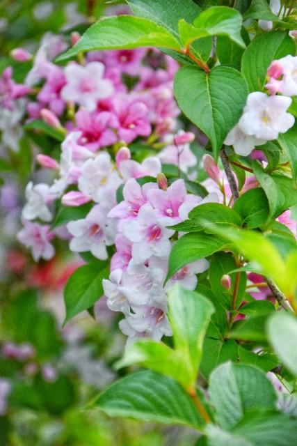 f:id:flowerTDR:20190516092615j:image
