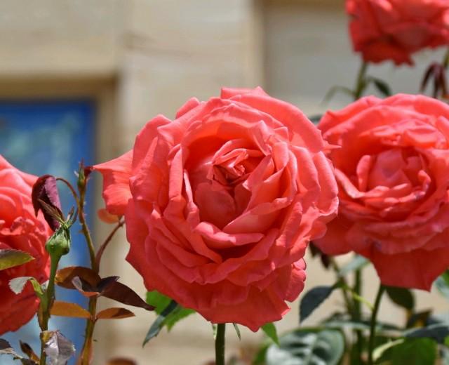 f:id:flowerTDR:20190517121008j:image