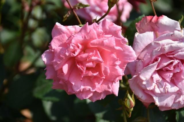 f:id:flowerTDR:20190518141720j:image
