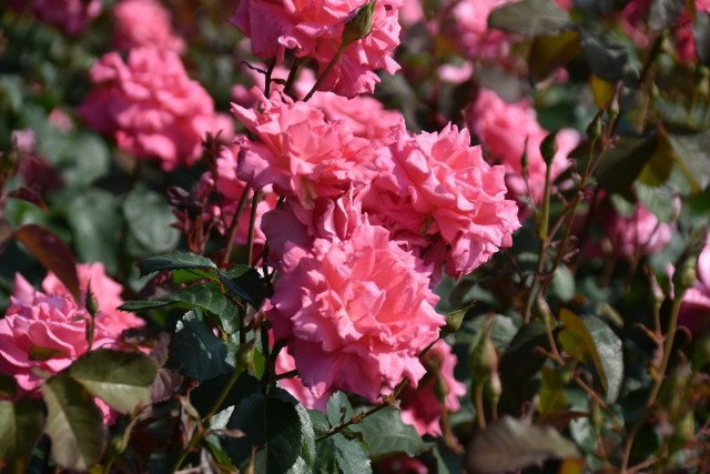 f:id:flowerTDR:20190518141727j:image