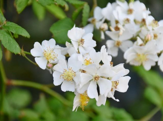 f:id:flowerTDR:20190522090900j:image