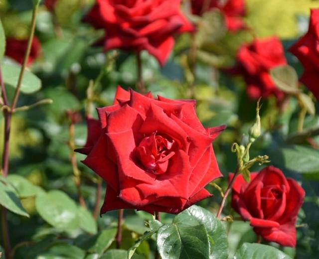 f:id:flowerTDR:20190524120526j:image