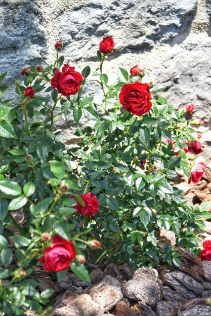 f:id:flowerTDR:20190526111005j:image