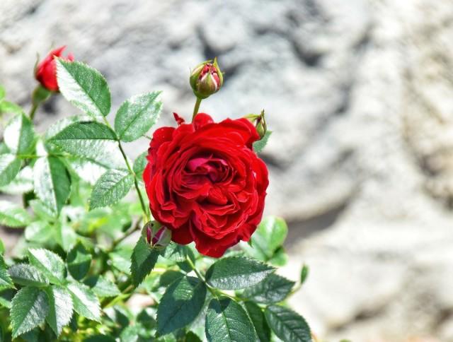 f:id:flowerTDR:20190526111013j:image