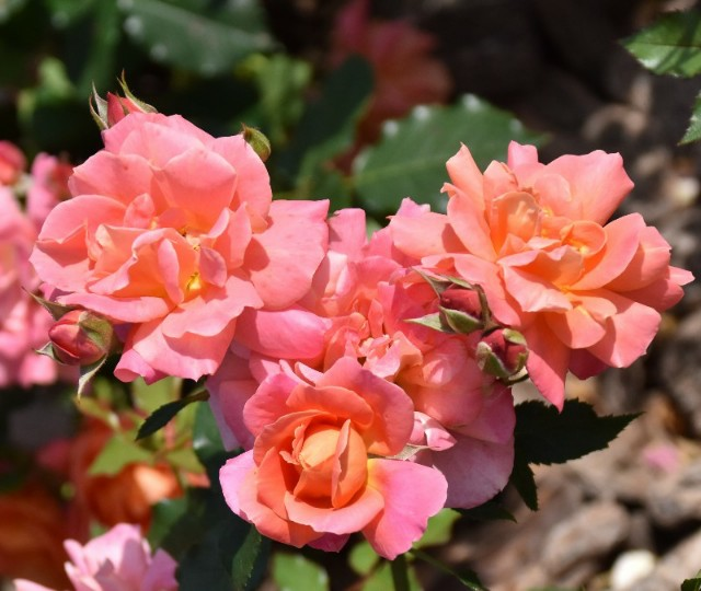 f:id:flowerTDR:20190601092745j:image