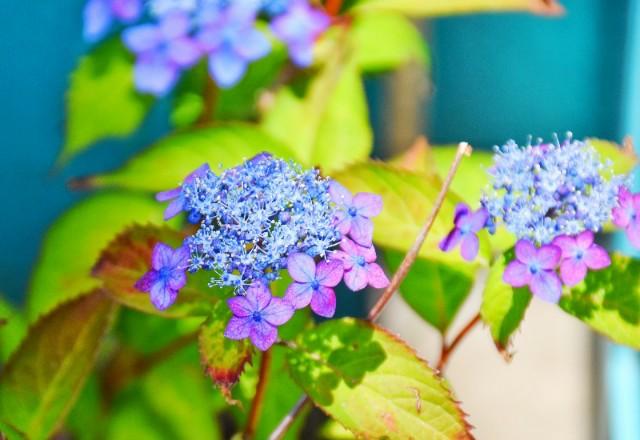 f:id:flowerTDR:20190611091307j:image