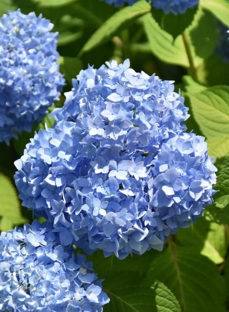 f:id:flowerTDR:20190614094118j:image
