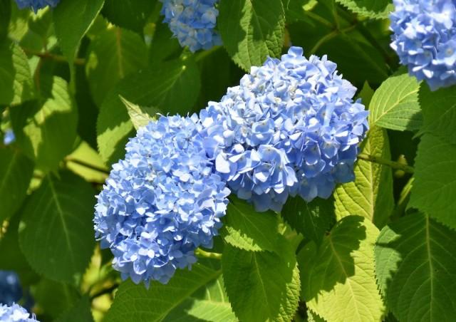 f:id:flowerTDR:20190614094129j:image