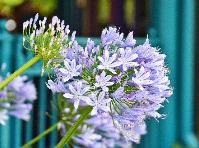 f:id:flowerTDR:20190626094800j:image