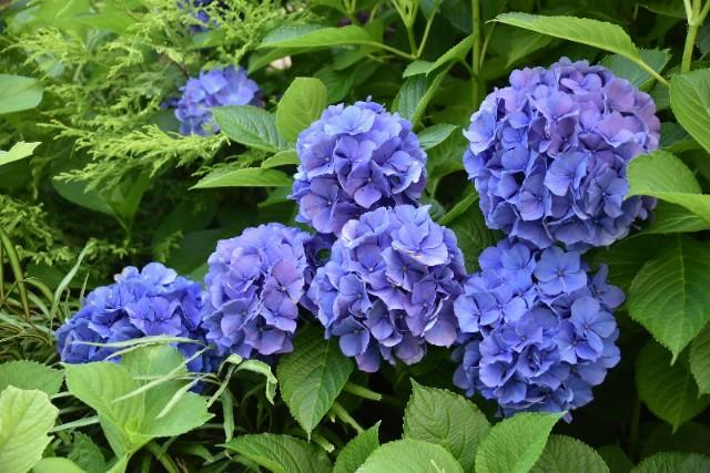 f:id:flowerTDR:20190701090313j:image