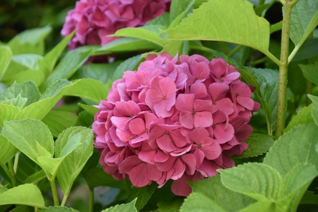 f:id:flowerTDR:20190701090319j:image