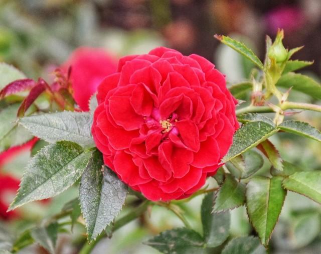 f:id:flowerTDR:20190702091321j:image