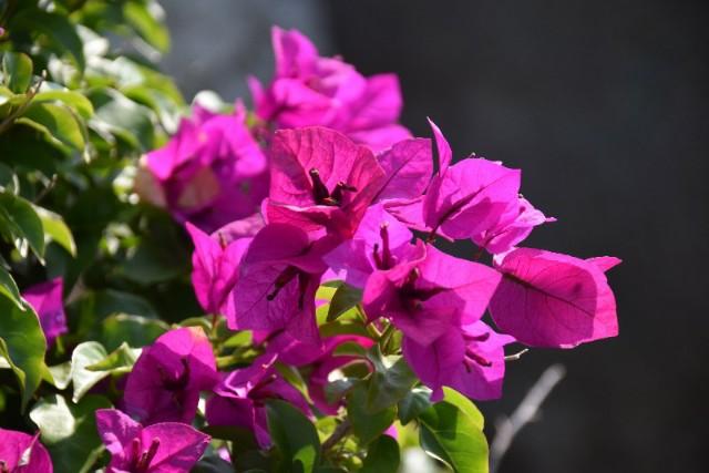 f:id:flowerTDR:20190722092407j:image