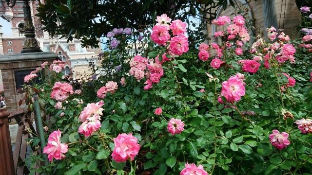 f:id:flowerTDR:20190727073408j:image