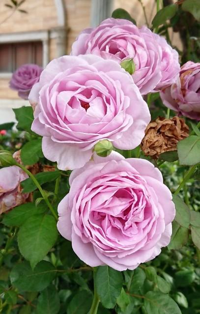 f:id:flowerTDR:20190727073424j:image