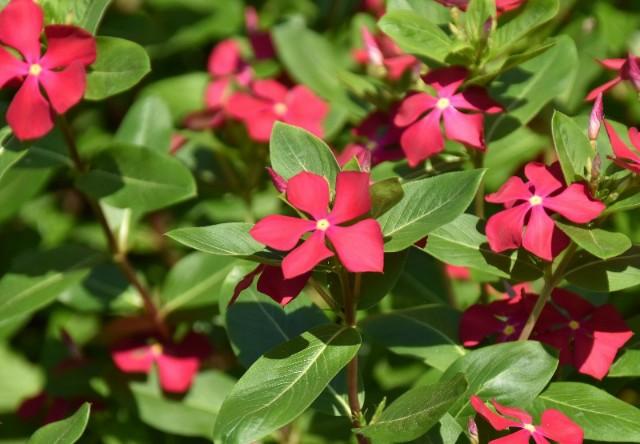 f:id:flowerTDR:20190811084207j:image