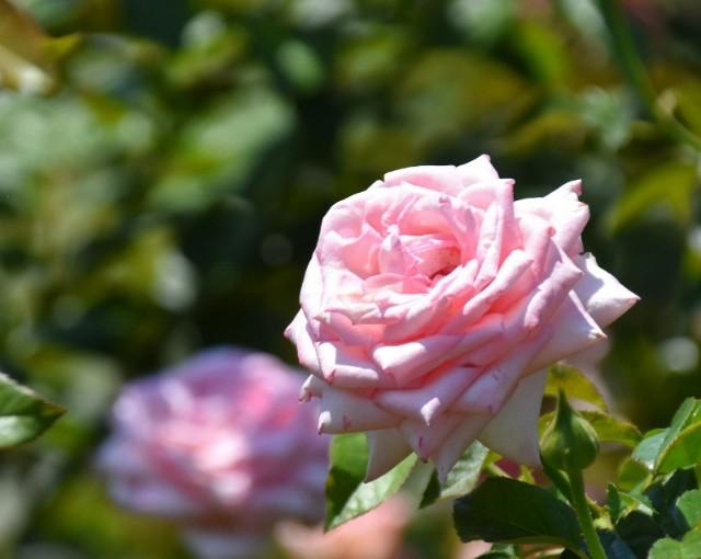 f:id:flowerTDR:20190813090100j:image
