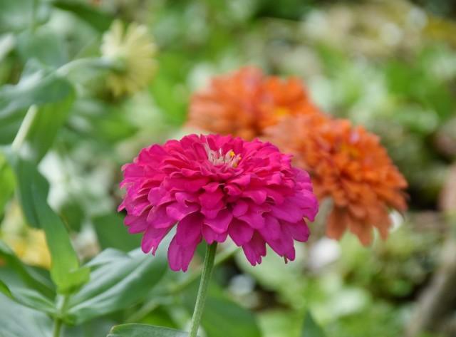f:id:flowerTDR:20190827091308j:image