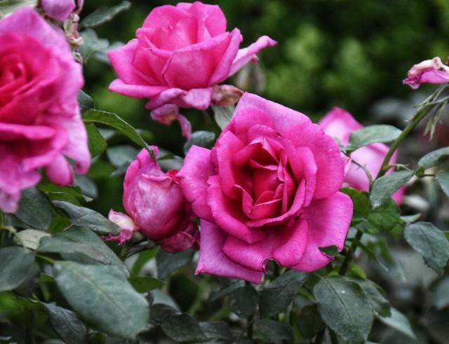 f:id:flowerTDR:20191029094424j:image