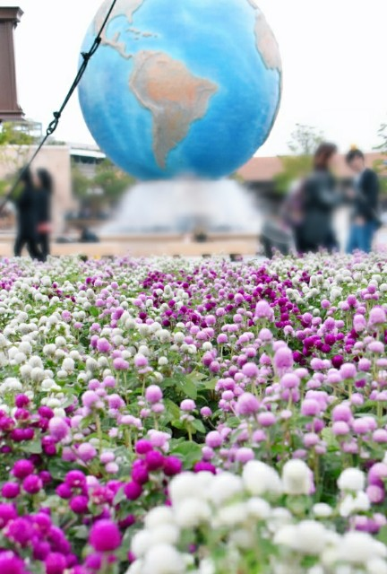f:id:flowerTDR:20191105090616j:image