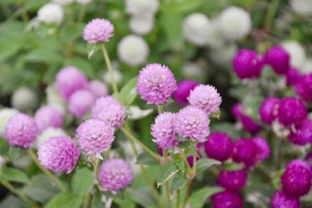 f:id:flowerTDR:20191105090624j:image