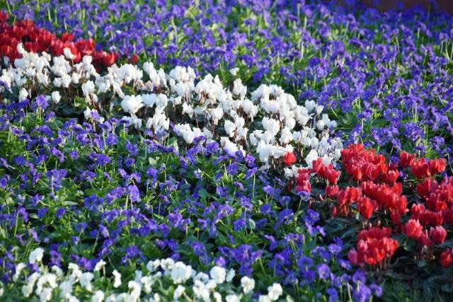f:id:flowerTDR:20191110084613j:image