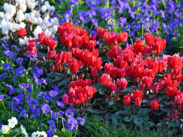 f:id:flowerTDR:20191110084619j:image
