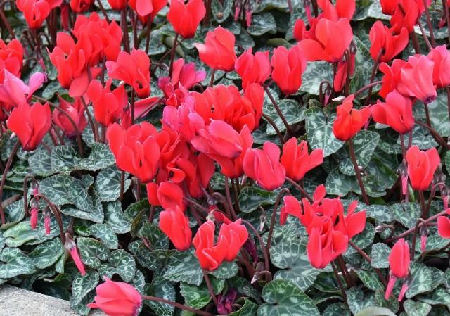 f:id:flowerTDR:20191115091351j:image