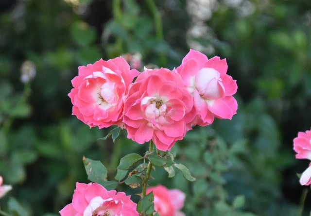 f:id:flowerTDR:20191125085913j:image