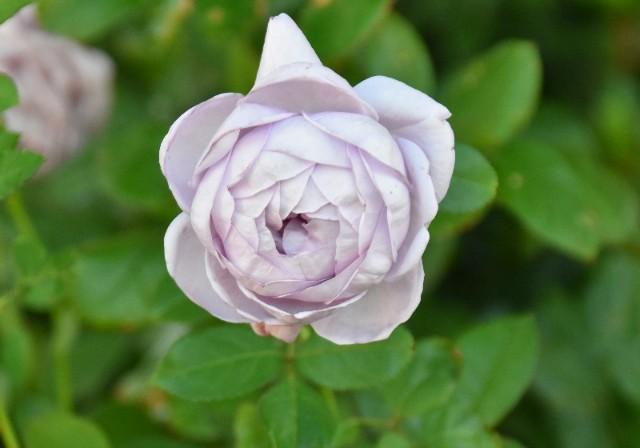 f:id:flowerTDR:20191125085922j:image
