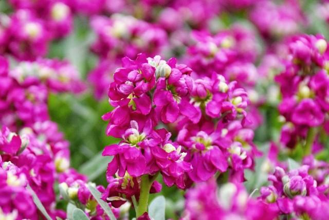 f:id:flowerTDR:20191217090844j:image
