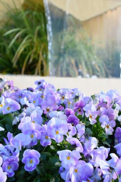 f:id:flowerTDR:20191224090448j:image