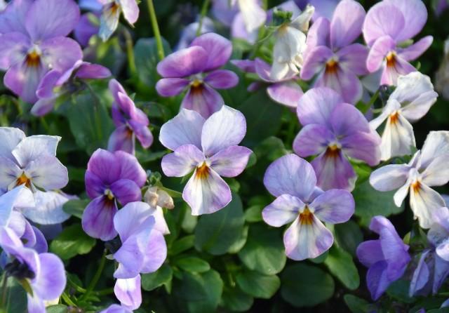 f:id:flowerTDR:20191224090455j:image