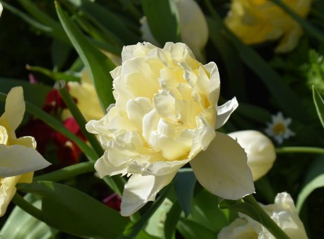f:id:flowerTDR:20200106073339j:image