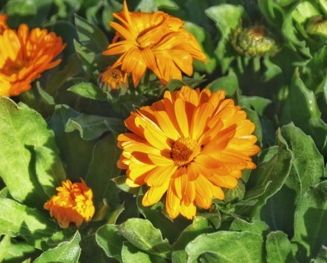 f:id:flowerTDR:20200107092527j:image