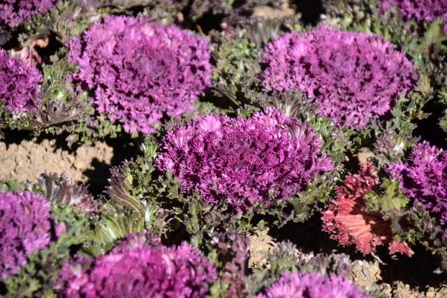 f:id:flowerTDR:20200108090741j:image