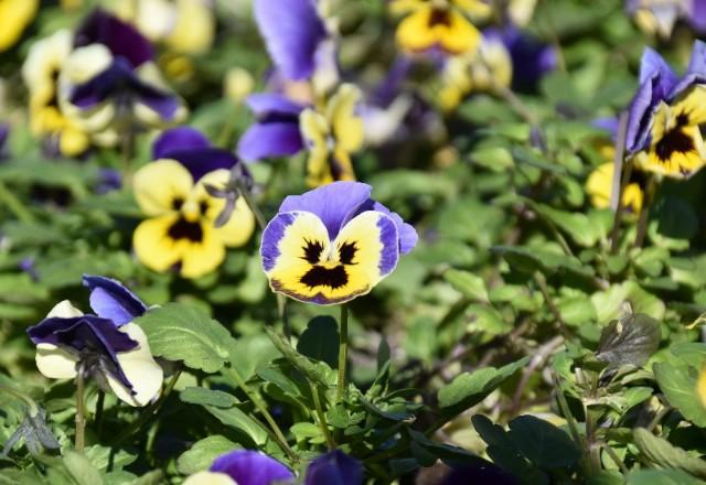 f:id:flowerTDR:20200109085841j:image