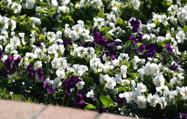 f:id:flowerTDR:20200111080041j:image