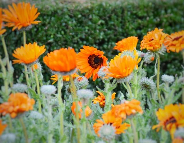 f:id:flowerTDR:20200114090619j:image