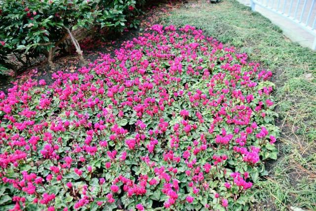 f:id:flowerTDR:20200115093010j:image