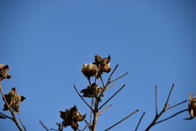 f:id:flowerTDR:20200117080758j:image