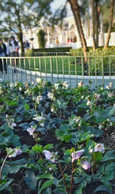 f:id:flowerTDR:20200125080153j:image
