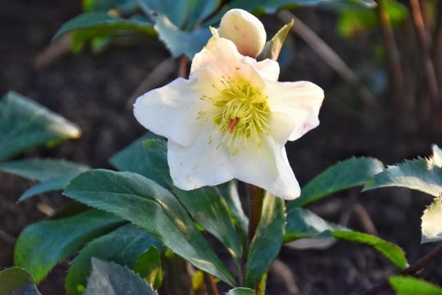 f:id:flowerTDR:20200125080201j:image